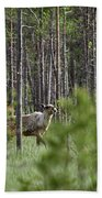 Rare And Wild. Finnish Forest Reindeer Beach Towel
