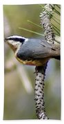 Red Breasted Nuthatch Beach Towel