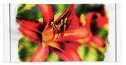 Red Daylily Beach Towel