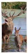 Red Deer In Bushy Park London Beach Towel