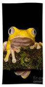Red-eyed Treefrog, Xanthic Form Beach Towel