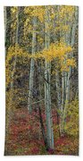 Red Forest Floor Beach Towel