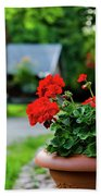 Red Garden Geranium Flowers In Pot , Close Up Shot / Geranium Fl Beach Towel
