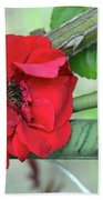 Red Rose On Natural Background With Green Leaves. Beach Sheet
