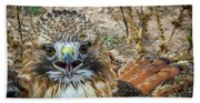 Red-tailed Hawk -5 Beach Towel