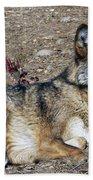Resting Wolf Beach Towel