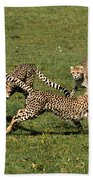 Ring Around The Cheetahs Beach Towel
