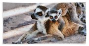 Ring Tailed Lemur With Baby Beach Towel