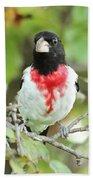Rose-breasted Grosbeak Beach Sheet