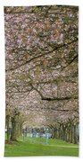 Rows Of Cherry Blossom Trees In Spring Beach Towel