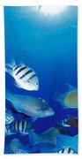 Saipan Marine Life Beach Towel
