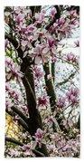 Saucer Magnolias In Central Park Beach Towel