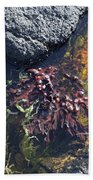 Seaweed Growing In A Rockpool On The Shore Roundstone County Galway Ireland Beach Towel