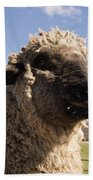 Sheep Face Beach Towel