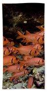Shoulderbar Soldierfish Beach Towel
