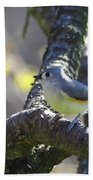 Tufted Titmouse - Small Bird Beach Towel