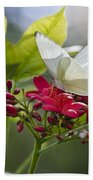 Southern White Butterfly  Beach Towel