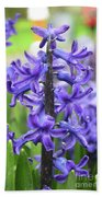 Spring Time With Blooming Hyacinth Flowers In A Garden Beach Towel