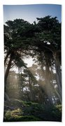 Sunbeams From Large Pine Or Fir Trees On Coast Of San Francisco  Beach Towel