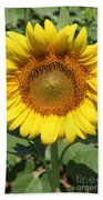 Sunflower 09 Beach Towel