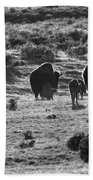 Sunset Bison Stroll Black And White Beach Towel