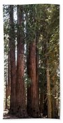 The House Group Giant Sequoia Trees Sequoia National Park Beach Towel