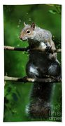 The Squirrel From Fairyland Beach Towel