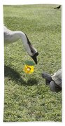 The Turtle And The Goose Beach Towel