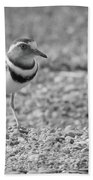 Three Banded Plover Beach Towel