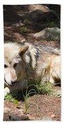 Tour Of Rocky Mountain Wildlife Foundation Beach Towel