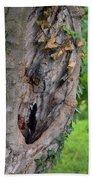 Tree Bark Detail, Natural Background. Beach Sheet