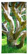 Tree In Golden Gate Park Beach Towel