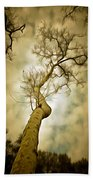 Tree Top In The Clouds Beach Towel