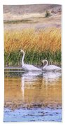 Tranquil Trumpeter Swans Beach Towel