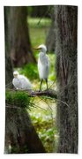 Two Baby Great Egrets And Nest Beach Towel