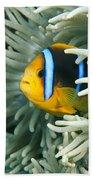 Underwater Close-up Beach Towel