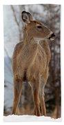 White-tailed Deer Three Beach Towel