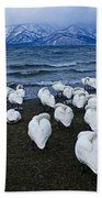 Whooper Swans In Winter Beach Towel
