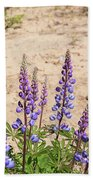 Wild Lupine Flowers Beach Towel