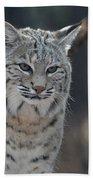 Wild Lynx Cat Beach Towel