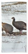Wild Turkey - Meleagris Gallopavo Beach Towel