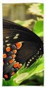 Wings Of Fancy Beach Sheet