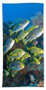 Yellow And Blue Striped Sweeltip Fish Beach Towel