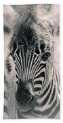 Zebra Colt In Spring Beach Towel