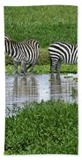 Zebras In The Swamp Beach Towel