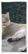 Zoo Lion Beach Towel