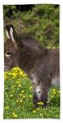 Miniature Donkey Foal Beach Towel