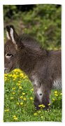 Miniature Donkey Foal Beach Sheet