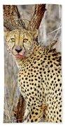 1022 Cheetah Beach Towel