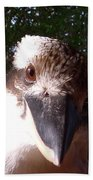 Australia - Kookaburra Looking Right At You Beach Towel